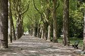 Brüksel - sokakta park bazilika için — Stok fotoğraf