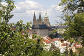 Prague - cathedral of st. vitus and garden — Stockfoto