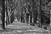 Bruselas - callejón en el parque de la basilique — Foto de Stock