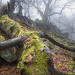 Stock Photo: Autumn forest in fog - old stem