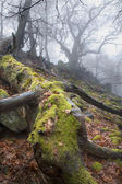 Autumn forest in the fog - old stem — Stock Photo