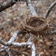Stock Photo: Nest in winter