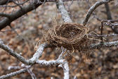 Nest in winter — Stock Photo