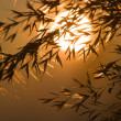 Detail of grass in sunset — Stock Photo