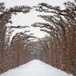 Vienna - live fence from gardens of Schonbrunn palace in winter — Stock Photo