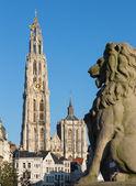 Amberes - catedral de nuestra señora con la estatua del león y suikerrui calle en luz del atardecer — Foto de Stock