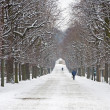 Vienna - alley from gardens of Schonbrun palace in winter — Stock Photo