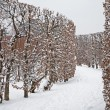 Vienna - live fence from gardens of Schonbrun palace in winter — Stock Photo