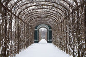 Vienna - roses busch from gardens of Schonbrunn palace in winter — Stock Photo