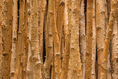 Birch decoration — Stock Photo