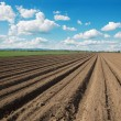 Stock Photo: Field of potatoes and sky in spring