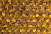 BRATISLAVA, SLOVAKIA - JANUARY 23, 2014: Detail of bottles from Interior of wine callar of great Slovak producer. — Stock Photo