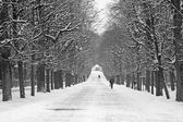 Vienna - alley from gardens of Schonbrunn palace in winter — Stock Photo