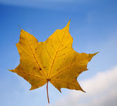 Leaf of maple and the sky - autumn — Zdjęcie stockowe