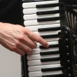 accordion — Stock Photo #39761913