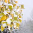 First snow — Stock Photo #39765425