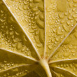 Leaf of maple in moisture - detail — Stock Photo #40571679