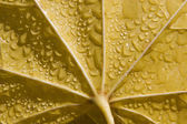 Leaf of maple in the moisture - detail — Stock Photo