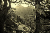 Alps landscape in Slovenia - backlight - Julian alps — Stock Photo
