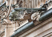 TOLEDO - MARCH 8: Detail of animal as gothic spoutler in rain from atrium of Monasterio de San Juan de los Reyes on March 8, 2013 in Toledo, Spain. — 图库照片