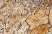 Structure of old beech stem - natural background — Stock Photo