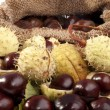 With wild chestnuts hedgehogs — Stock Photo