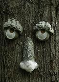 Tree Face — Stock Photo