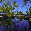 Hawaiian Fish Pond — Stock Photo #24353303
