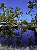 Hawaiian Fish Pond — Stock Photo
