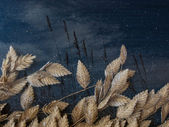 Sea Oats — Stock Photo