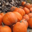 Autumn pumpkins — Stock Photo #13264114