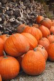 Calabazas de otoño — Foto de Stock