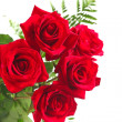 Red roses on white background  — Stockfoto