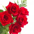 Red roses on white background - Stockfoto