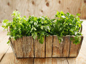 Fresh parsley in wooden pot — Stock Photo