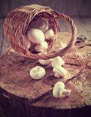 Fresh mushrooms in basket — Stock Photo