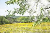 Spring or Summer Landscape — Stock Photo