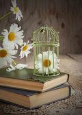 Zátiší s heřmánkem a knihy — Stock fotografie