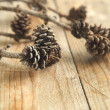 Pine cones with branch on a wooden background. — Stock Photo