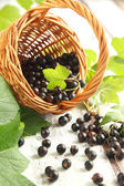 Black currant in basket.Selective focus — Stock Photo