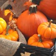 Fresh Decorative Pumpkins. — Stock Photo