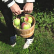 Female hands holding basket full of apples.  — Stok fotoğraf