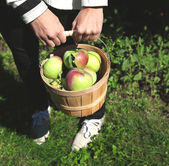 Female hands holding basket full of apples. — Stock Photo