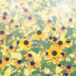Natural flowers background. Black eyed susan plant in a garden  — Stock Photo