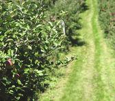 Granja de apple — Foto de Stock