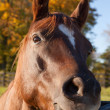 Stock Photo: Horse head