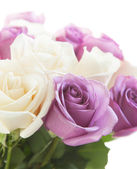 Whire and pink roses — Stockfoto