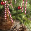 Green Branches of Fir with Christmas Decorationin in Basket — Stock Photo