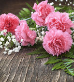 Pink Carnation on wooden background — Stock Photo