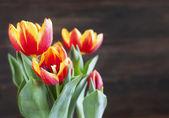 Spring tulips. Shallow depth of field. — Foto de Stock
